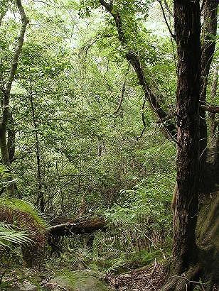 天然林内部